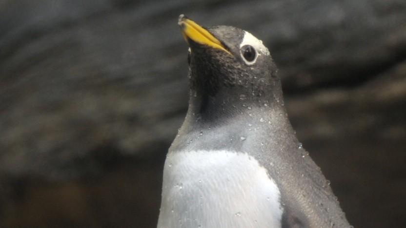Die Linux-Distribution Elementary OS ändert den hauseigenen Desktop Pantheon.