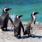 Kernel: Linux 5.9 schließt Lizenzlücke