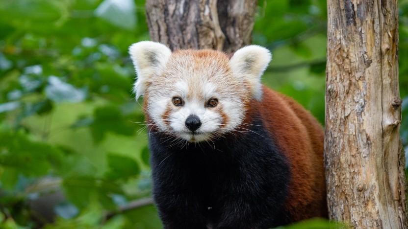 Ohne das Geld von Google könnte Firefox wohl nur schwer weiterentwickelt werden.