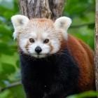 Firefox: Mozilla fürchtet um Einnahmen wegen Google-Kartellverfahren