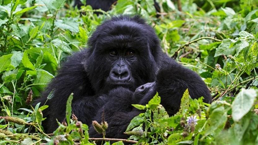 Ubuntu 20.10 alias Groovy Gorilla ist erschienen.