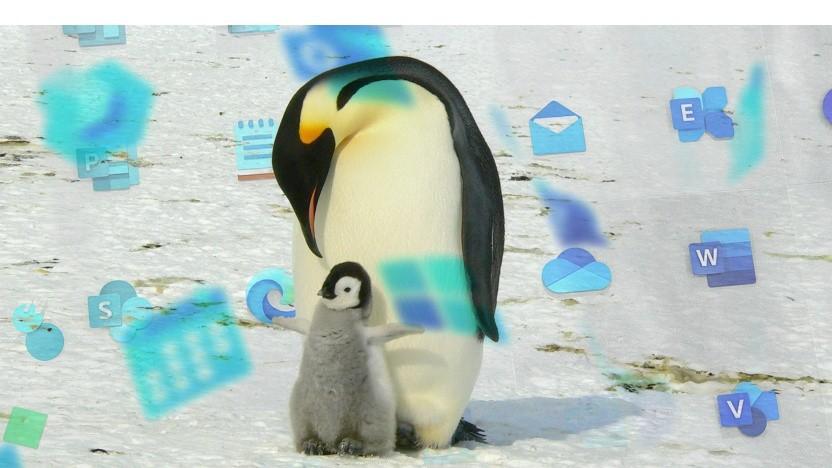 Windows und Linux - geht das zusammen? Und wenn ja, wie?