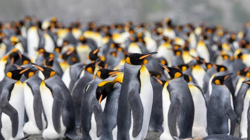 Der Panfrost-Treiber für Linux läuft stabil auf Bifrost-GPUs.