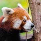 Mozilla: Firefox bekommt Javascript mit Warp-Geschwindigkeit