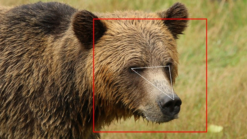 Gesichtserkennung funktioniert auch bei Bären.