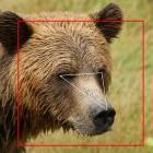Machine Learning: Forscherteam nutzt Gesichtserkennung für Bären