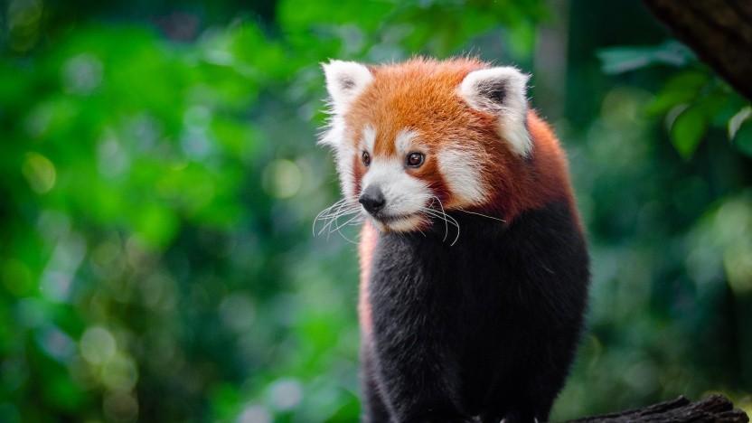 Der Firefox 83 ist verfügbar.