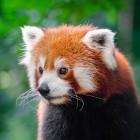 Mozilla: Firefox 83 erscheint mit optionalem HTTPS-Zwang