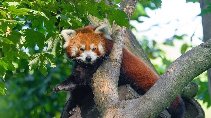 Der Firefox-Browser soll weltweit standardmäßig DoH verwenden. Wie ist aber noch nicht klar.