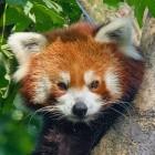 Firefox: Mozilla startet öffentliche Befragung zu DoH-Nutzung