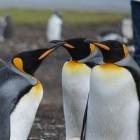 Linux-Kernel: Linux bekommt Systemaufruf für Windows-Spiele