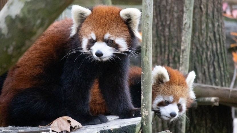 Der Firefox-Macher Mozilla hat sich offenbar mit Yahoo geeinigt.