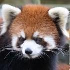 Firefox: Mozilla bekommt zusätzliches Jahreseinkommen