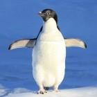 Kernel: Linux 5.10 sichert ARM und Android besser ab