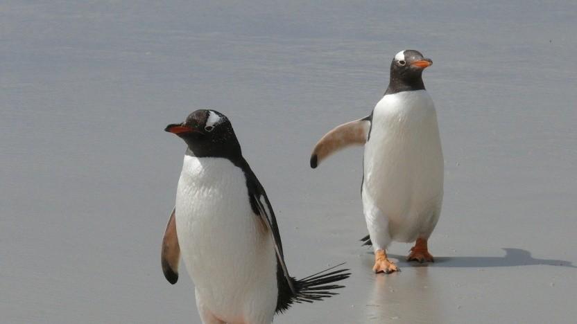 Linux-Nutzern bleiben Alternativen zu CentOS.