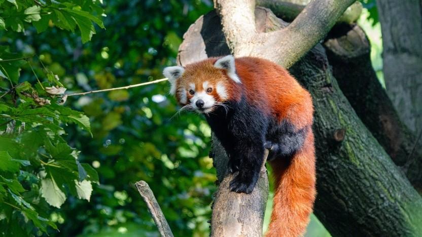 Firefox 84 ist erschienen.