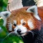 Mozilla: Firefox 84 läuft nativ auf Apple Silicon
