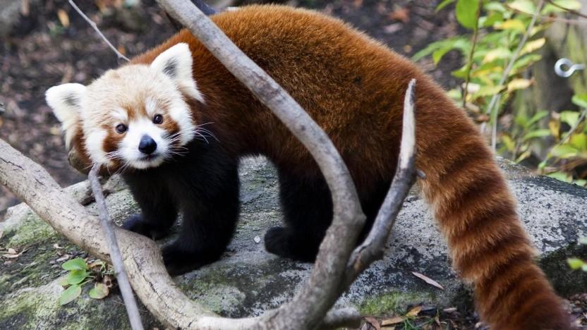 Die Netzwerk-Ressourcen des Firefox sollen besser isoliert werden.