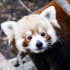 Mozilla: Firefox bekommt Network Partitioning