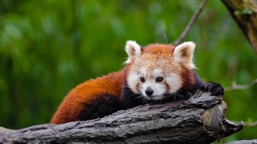 Keine Pläne für PWA im Firefox