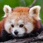 Mozilla: Firefox soll PWA nicht unterstützen