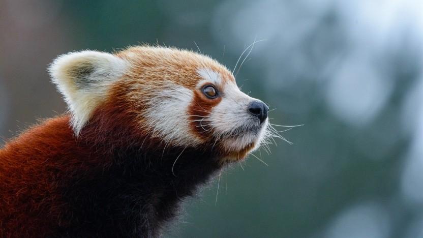Der Firefox-Browser soll ein neues Design bekommen.