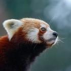 Proton: Mozilla arbeitet an neuem Firefox-Design