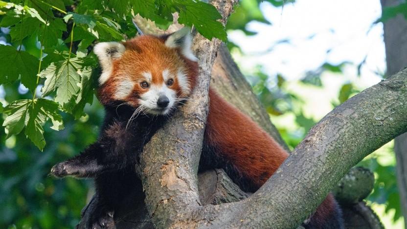 Der Support für die Hardware-Beschleunigung im Firefox-Browser unter Linux ist noch sehr beschränkt.