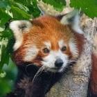 Mozilla: Linux-Hardwarebeschleunigung in Firefox verlangt Ausnahmen