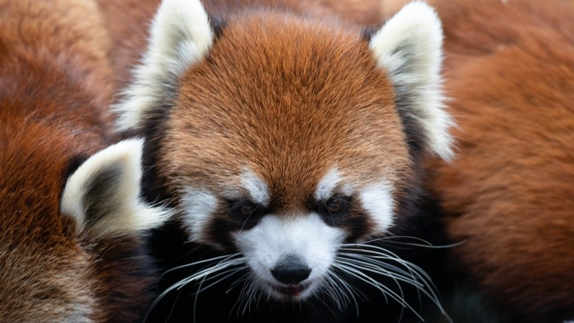 Der Firefox 85 nutzt Network Partitioning.