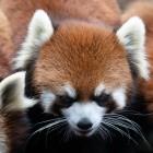 Firefox 85: Mozilla sagt Supercookies den Kampf an