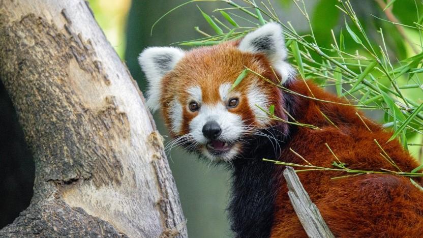 Die Experimente zur Sprachsteuerung im Firefox werden eingestellt.