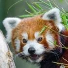 Webspeech-API: Mozilla stellt Sprachsteuerung im Firefox-Browser ein