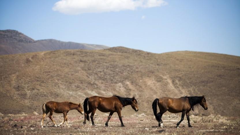 In der Wüste von Nevada könnten autonome Firmenstädte entstehen.