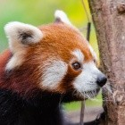 Fuzzing: Mozilla automatisiert Hilfen bei komplizierten Bugs