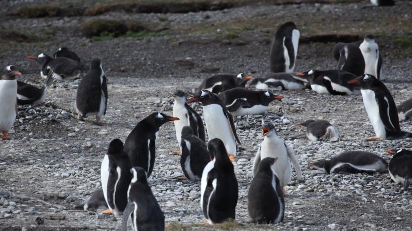 Die Linux-Kernel-Entwickler diskutieren die Aufnahme des Code für den M1-Port.
