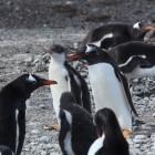 Asahi Linux: Stabiler Linux-Support für M1-Macs frühestens im Sommer