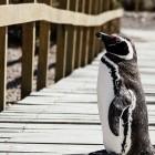 Linux: Kernel-Lockdown soll Ruhezustand unterstützen