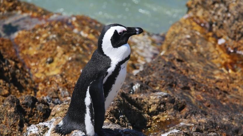 Der Linux-Kernel soll sicherer werden.