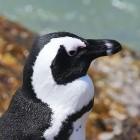 Linux Foundation: Google finanziert Security-Spezialisten für den Linux-Kernel