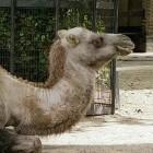 Freizeitparks und Zoos: Großes Datenleck bei Zahlungsdienstleister Ticketcounter