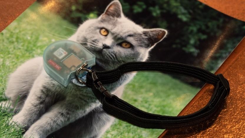 Der Katzentracker auf Lorawan-Basis könnte bald in Serie gehen.