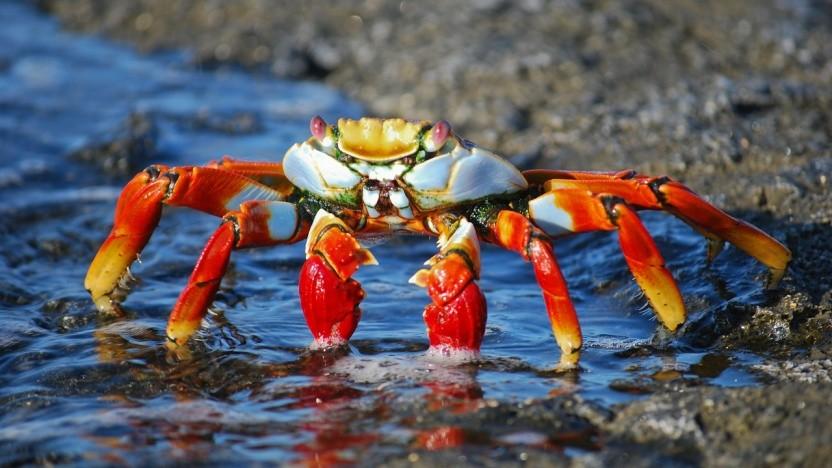Das inoffizielle Maskottchen der Rust-Community ist eine Krabbe namens Ferris.