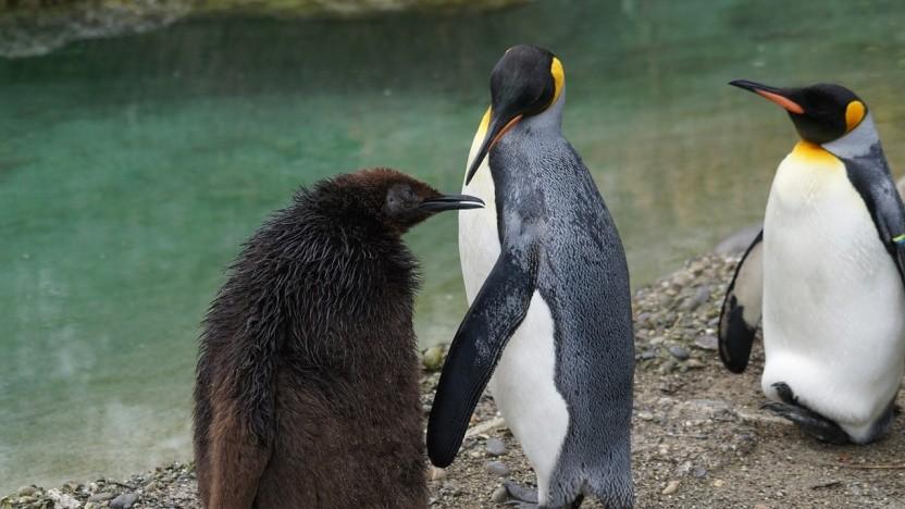 Der Linux-Kernel erhält erstmals Versuche zur Rust-Integration.