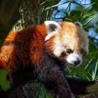 Mozilla: Firefox 87 schneidet HTTP-Referer ab