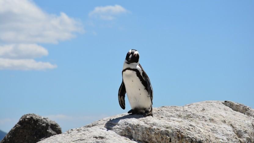 Auf Linux laufen bald auch Cobol-Programme.