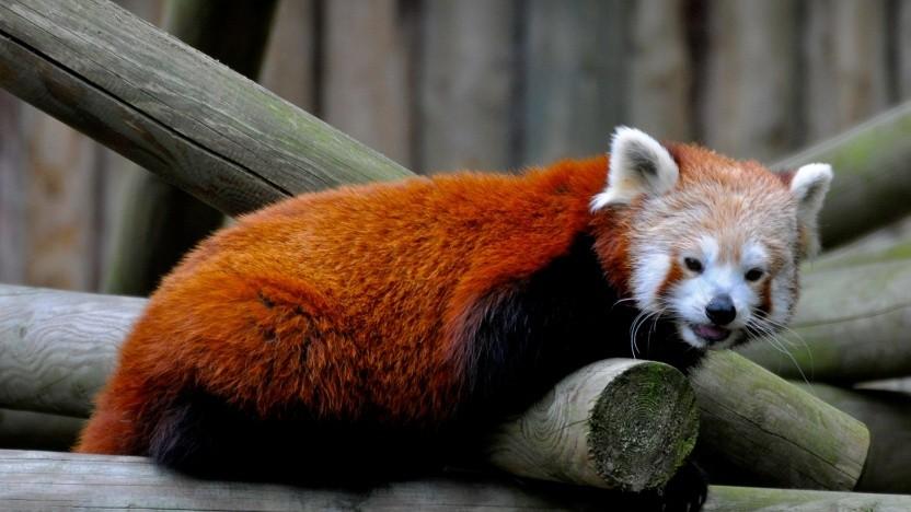 Der Firefox-Browser bekommt ein neues Design.