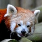 Proton: Mozilla testet neues Firefox-Design