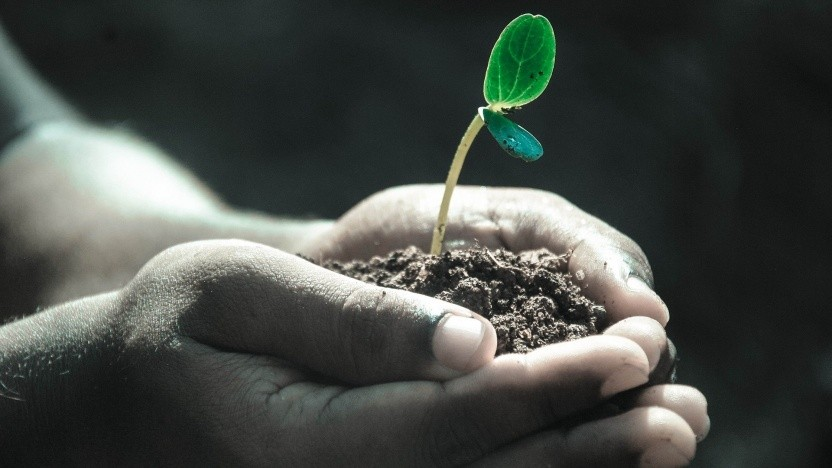 Trotz eines höheren Angebots an CO2 in der Atmosphäre nehmen Pflanzen es nicht auf.