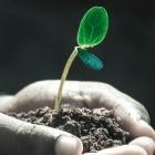 Klimawandel: Mehraufnahme von Kohlendioxid durch Pflanzen am Limit